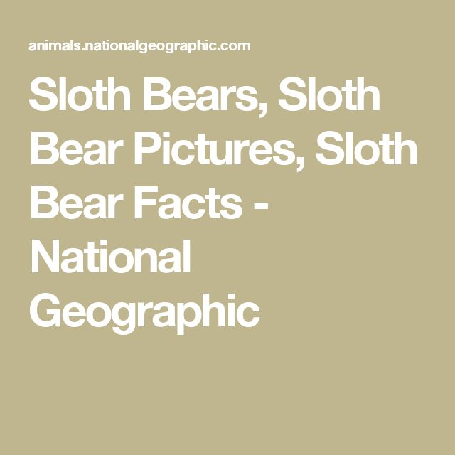 Sloth Bears, Sloth Bear Pictures, Sloth Bear Facts - National Geographic