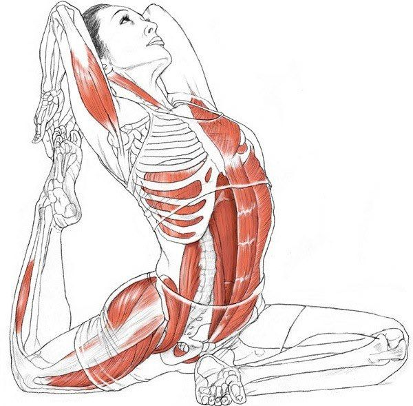 Eka Pada Rajakapotasana (One-Legged King Pigeon Pose)        B e n e f i t s:  — Stretches the thighs, groins and psoas, abdomen, chest and shoulders, and neck  — Stimulates the abdominal organs  — Opens the shoulders and chest
