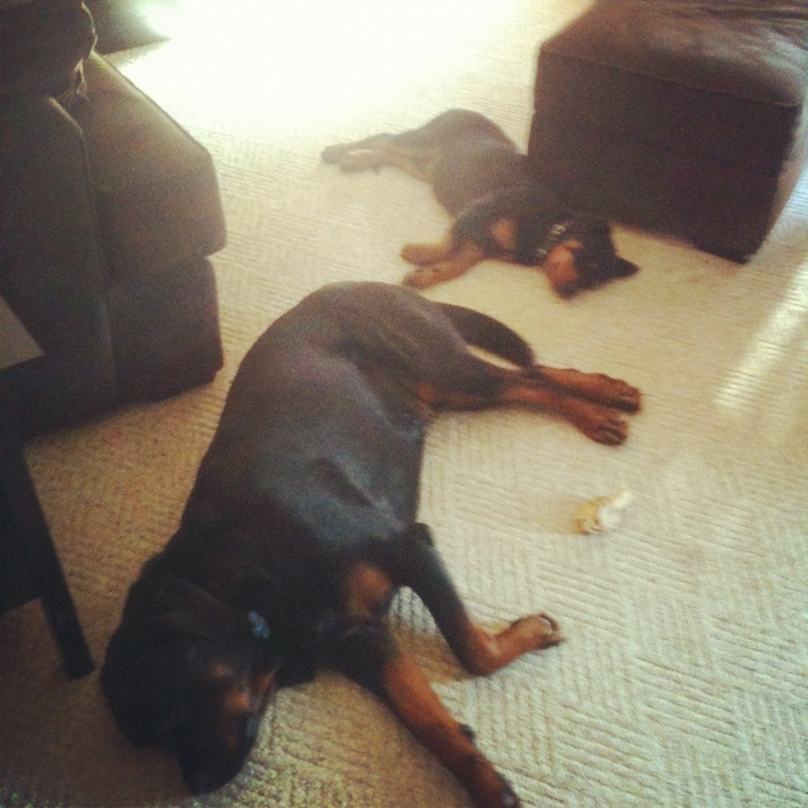 Watch Dogs, Rottie, Cool Watches