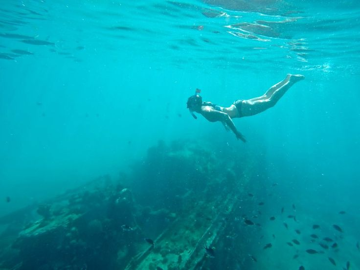 Snorkeling with Carrie over shipwrecks and with sea turtles off Barbados