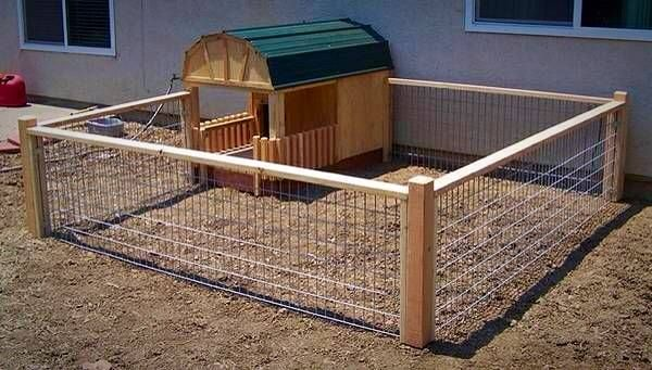 Outdoor Pen for Mini Pig.
