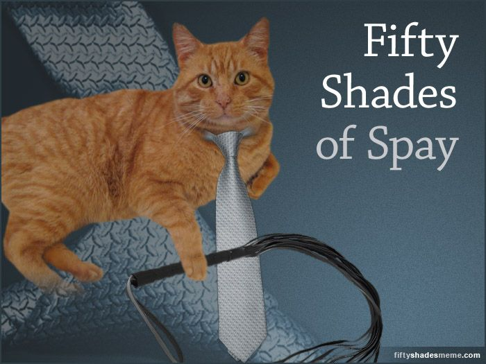 50 shades of spay: Cat Stars, Memes Spay, Adorable Cat, Cat Obsession, 50 Shades, Random Cat, Grey Memes, Books But, Cat Lady