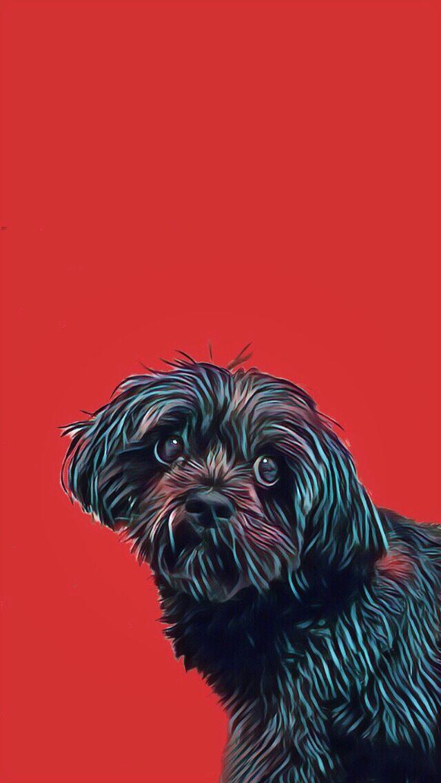 Black Dog Red Iphone Wallpaper Lhassa Apso Art Edit Dog Wallpaper Iphone Dog Wallpaper Black Dog Cool black dog wallpaper for iphone