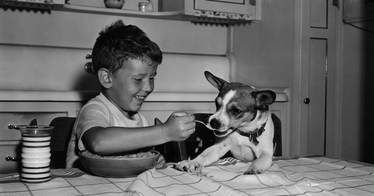 The best dog foods according veterinarians dog food