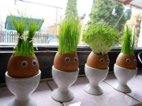 Put cotton wool inside eggshells and dampen with water. Sprinkle seeds (wheatgrass would be good, or any other small sprout) all over the cotton wool – good coverage will give you a full head of hair. Pop them on a windowsill and wait for the hair to sprout    Get more tips, recipes, and FUN by joining our facebook group.    https://www.facebook.com/groups/592144854136650/