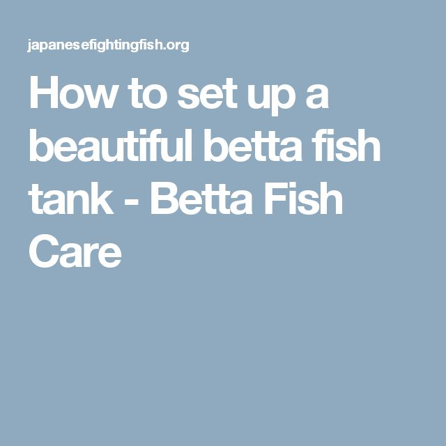 Best 20 betta fish care ideas on pinterest no signup for How to care for a betta fish