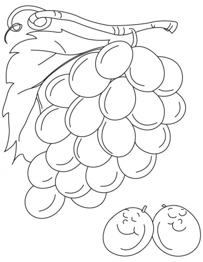 grapes coloring pages for kids - photo#20