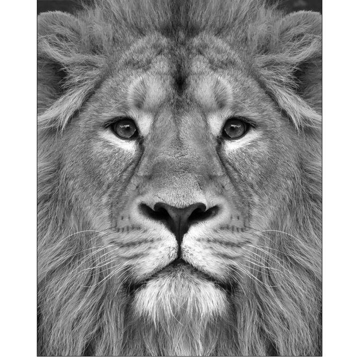 lejon-fleeceplad.jpg (800×800)