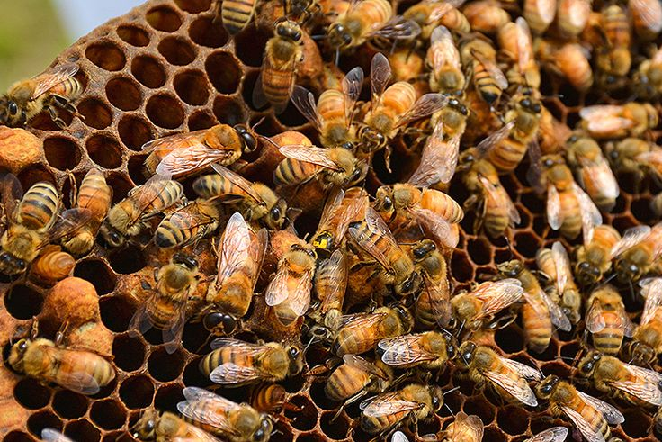 Fifty-seven agricultural chemicals are found in victims of a mysterious colony collapse disorder.