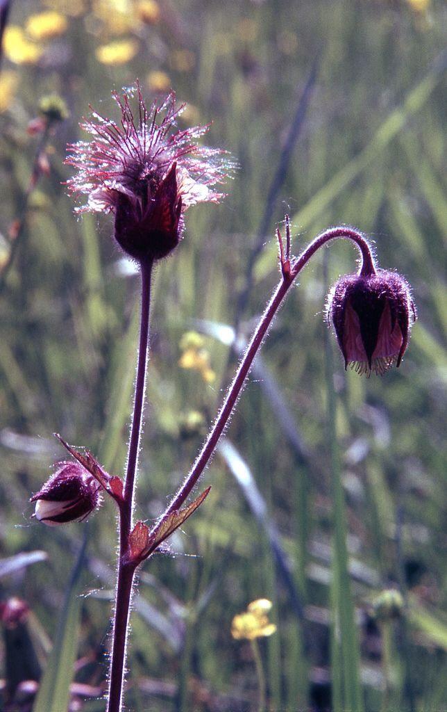 1979 Kytöniemen luontokuvia 013