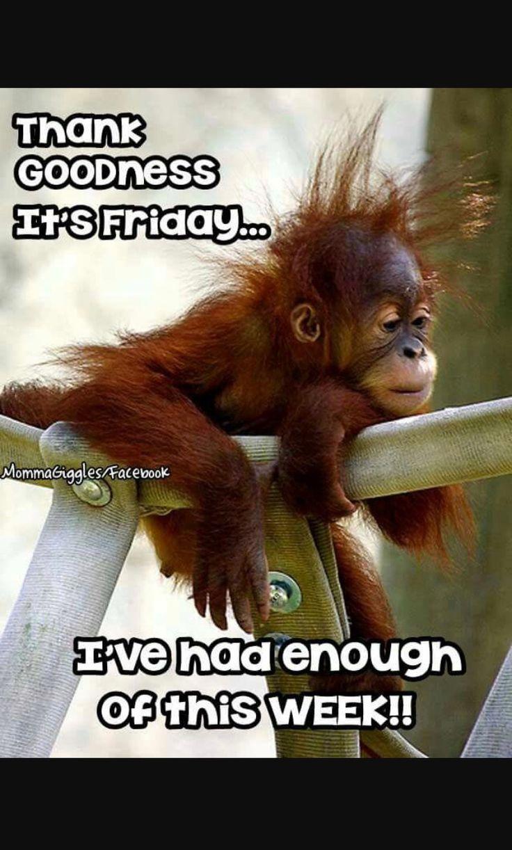 Поздравляю, доброе утро с обезьянкой картинки