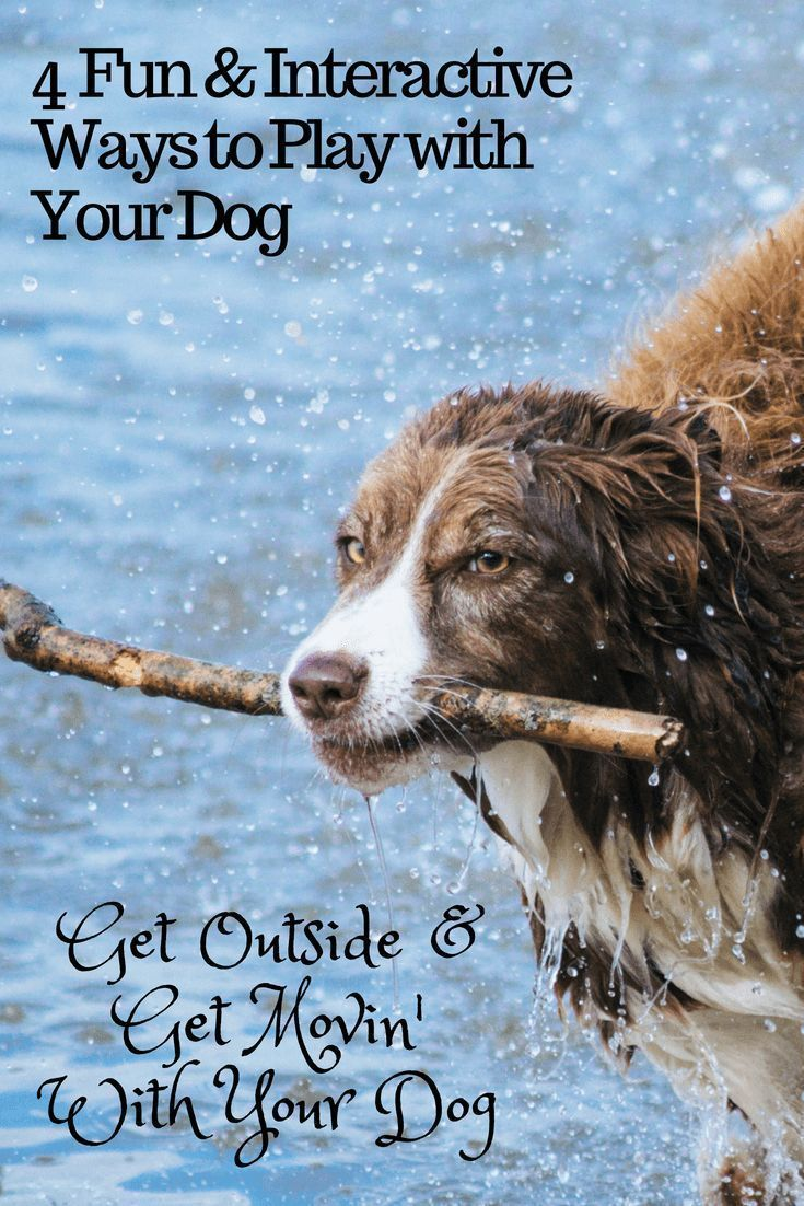 4 Fun Interactive Ways To Exercise Your Dog Dog Training Dogs