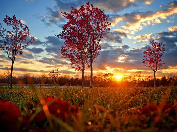 autumn sunset - Google Search