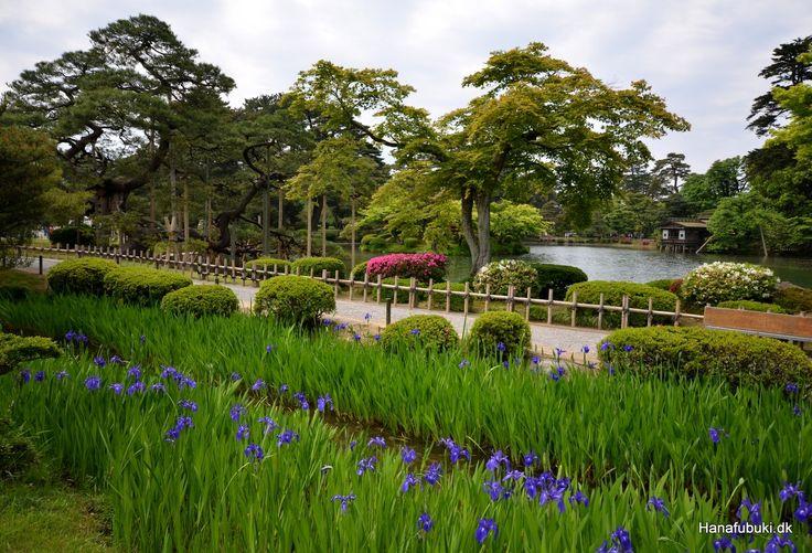 Kenrokuen, iris blooming,  Kanazawa