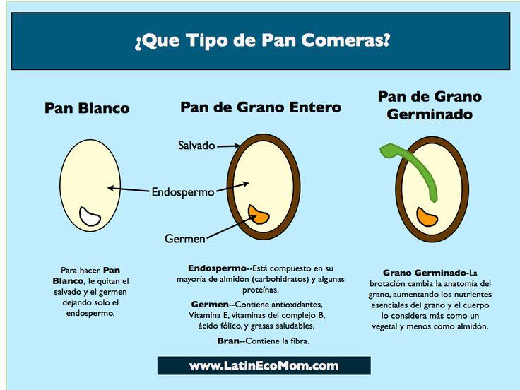 Explica porque el pan de grano entero y de grano germinado son mejores para la salud.