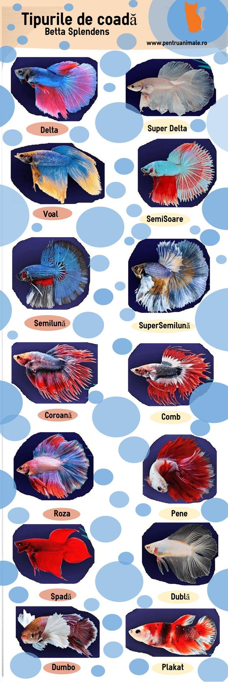 Infografic Tipurile de Coada ale pestilor Beta Spelndes. #pentruanimale