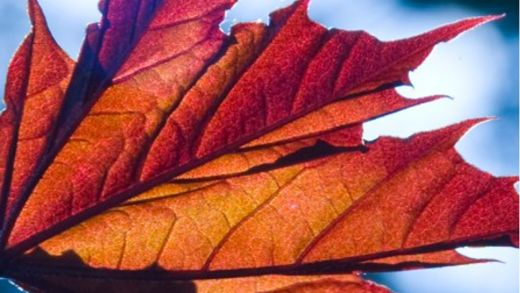 Free beautiful autumn desktop wallpapers and Facebook covers