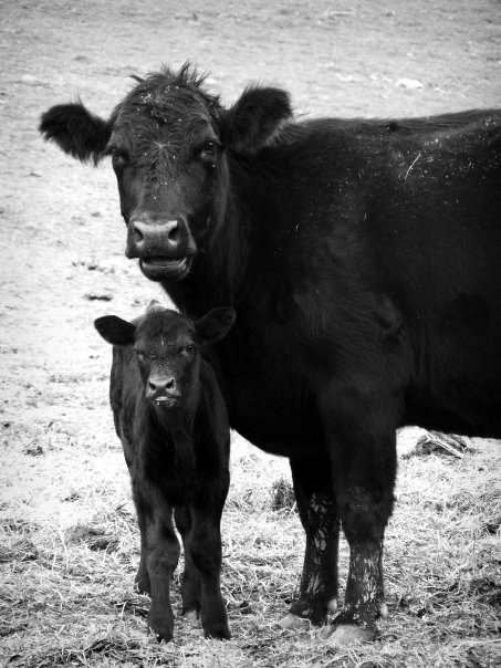 Mommy and Calf