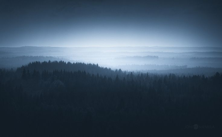 Ethereal silence captured in photos of finnish forests and trees.