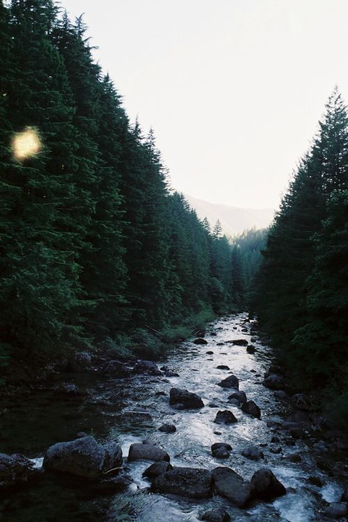 expressions-of-nature:  Camping by India Rose