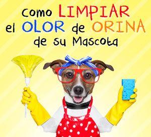 mascotas olor de orina limpia