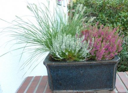17 best ideas about winterharte balkonpflanzen on pinterest. Black Bedroom Furniture Sets. Home Design Ideas