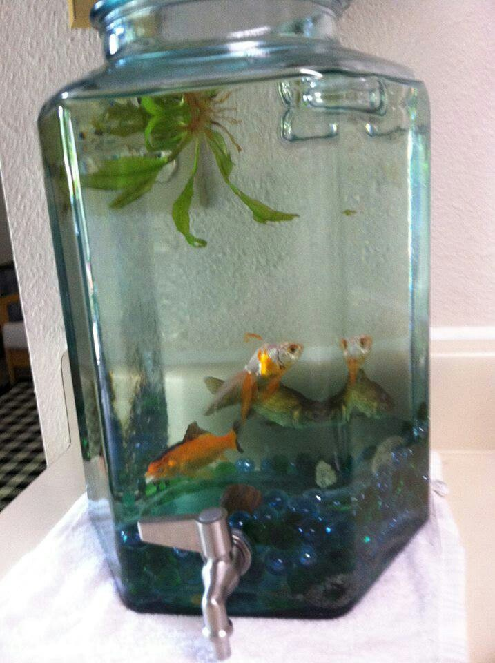 1000 images about outdoor fish tank on pinterest plant for Dirty fish tank