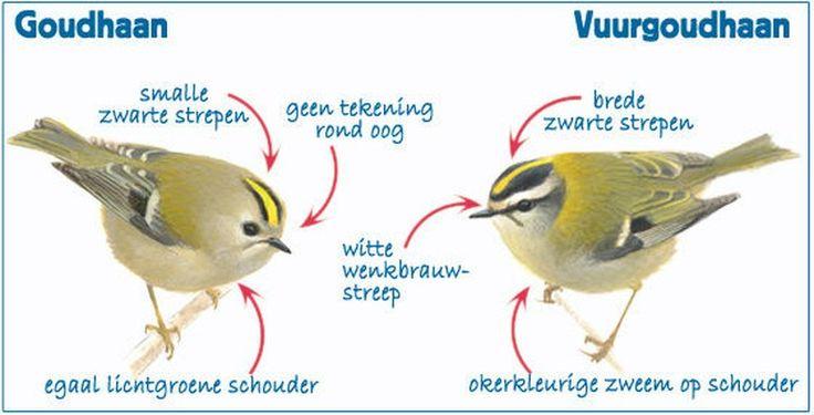 Nationale Tuinvogeltelling 2016 | Handige herkenningstips!