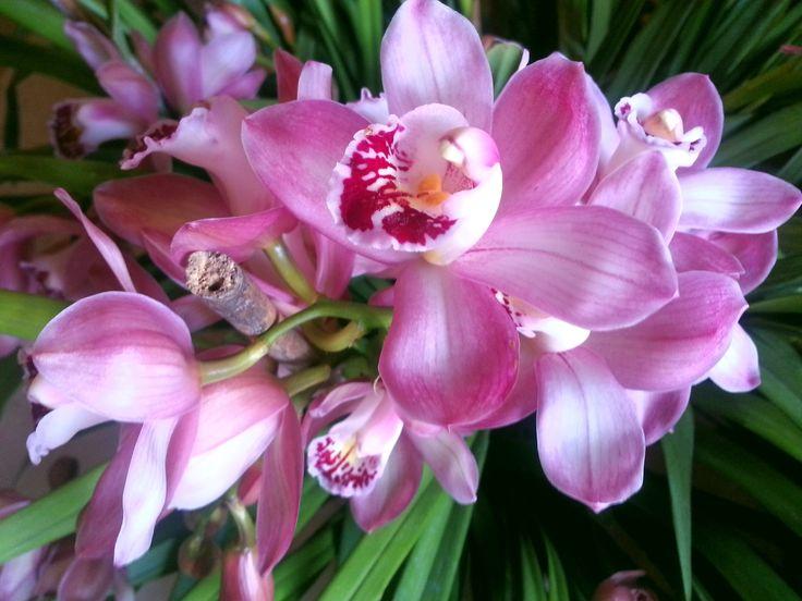 Orchidee toscane - Mum's Orchids