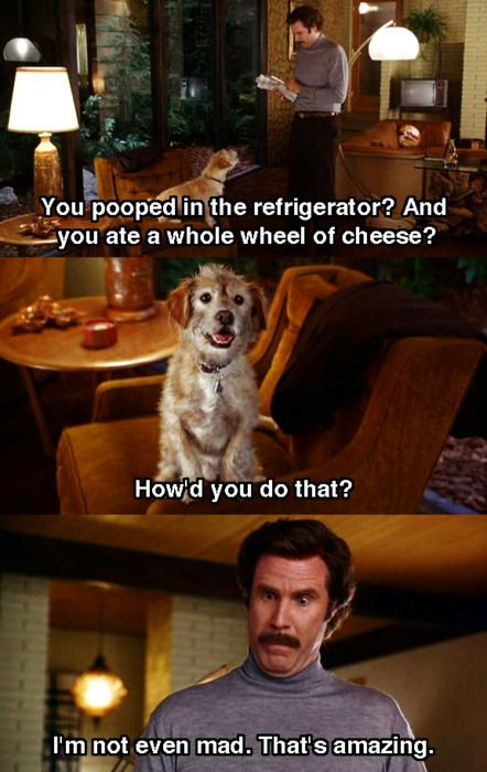 Anchorman. Absolutely love this movie.
