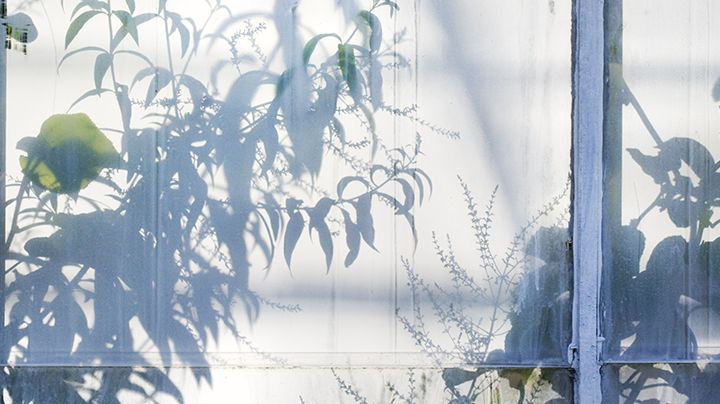 In de zomer kan het binnenin je kas ontzettend warm worden. Temperaturen in de zon van 50 °C en meer zijn geen uitzondering. Dergelijke temperaturen kunnen een algemene groeistop veroorzaken bij je planten, maar ook tot verbranding leiden. Wit maken, of niet? Tomaten, bijvoorbeeld, die groeien niet meer bij temperaturen hoger dan 35 °C. Zorg…
