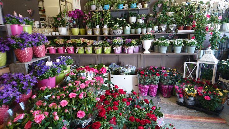 Kukkakauppa täynnä äitienpäiväkukkia ja lisää on ulkona ja vitriinissä. Kukkia voi tilata myös verkkokaupasta http://meritorni.ekukka.fi