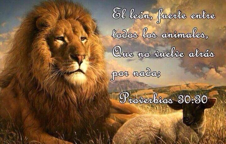 El León, fuerte entre todos los animales, que no vuelve atrás por nada