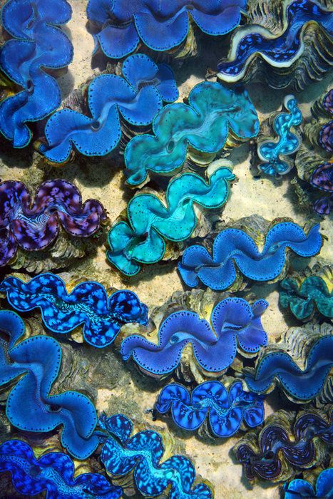 #yearofcolor shades of blue underwater clams