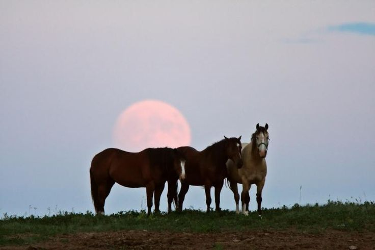 Full Moons had given names in many ancient cultures. The names we use today often reflect the changing seasons and nature, like Harvest Moon, Strawberry Moon, or Snow Moon.