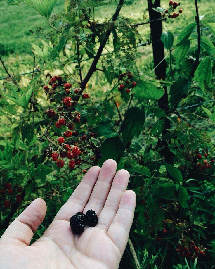 How is it blackberry season already?