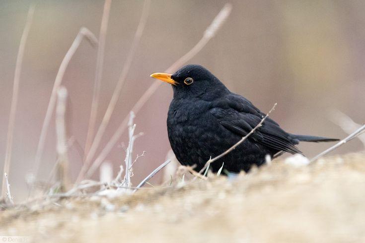 25 best ideas about les oiseaux du jardin on pinterest for Oiseaux du jardin