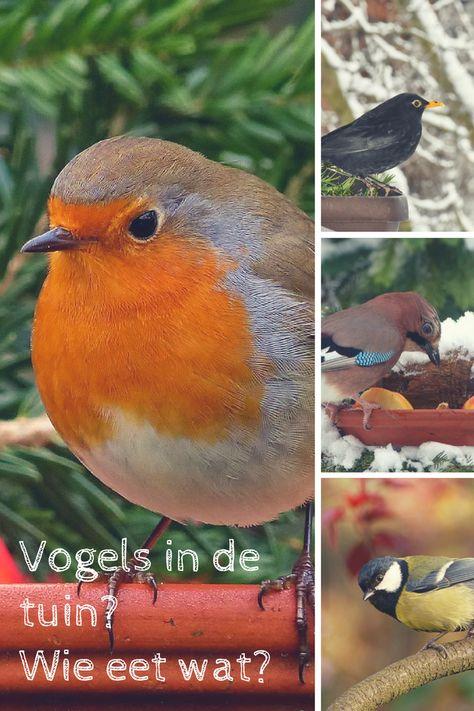 Vogels in de tuin : wie eet wat?
