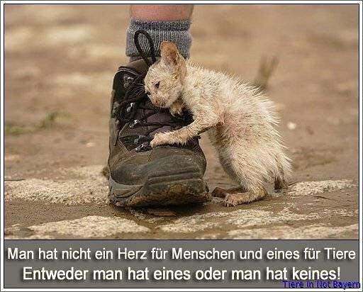 #katzenhelfen #katze #tiere #tierschutz #naturschutz #herz #help #helfen - ___naturliebhaber___