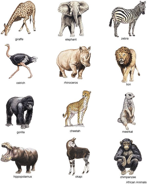 Line Art Jungle Animals : Little grey bungalow free clipart african animals