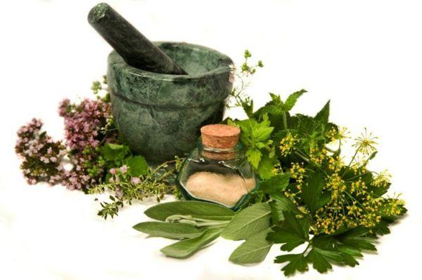 kräuter und heilpflanzen gesunde ernährung