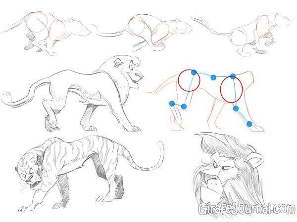 Как рисовать животных для начинающих художников?