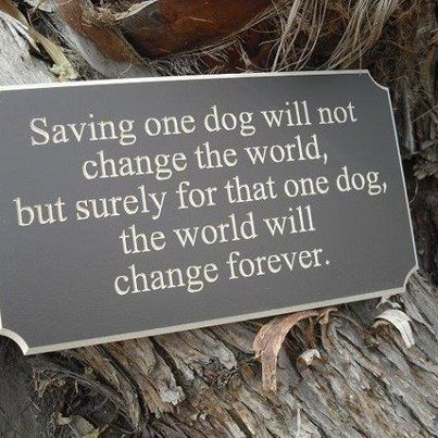 This made me tear up! I don't rescue adult dogs or ones from the pound but I do tend to get a lot of dogs from a breeder and that's pretty much the same thing!