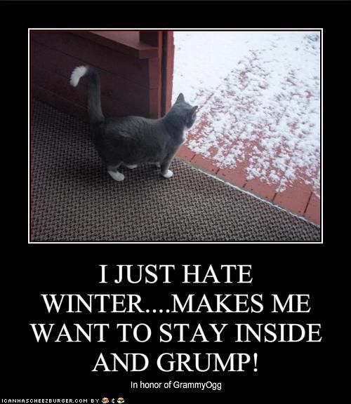how to make your cat want to stay inside