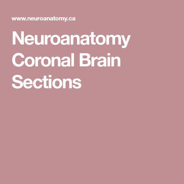 Neuroanatomy Coronal Brain Sections