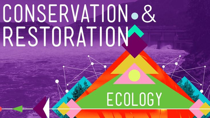 Conservation and Restoration Ecology: Ecology #12