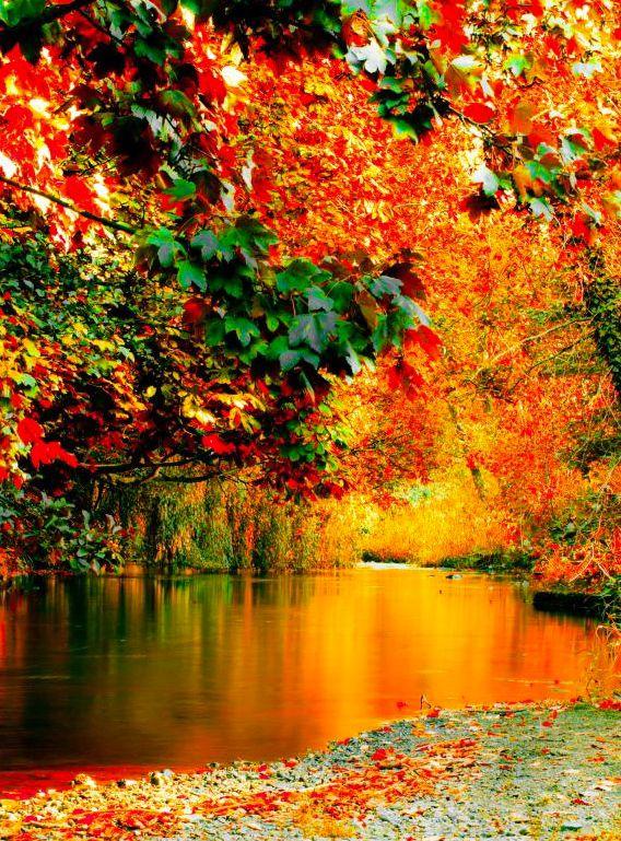 "djferreira224: "" Autumn along the River Dodder, Rathfarnham, Dublin. """