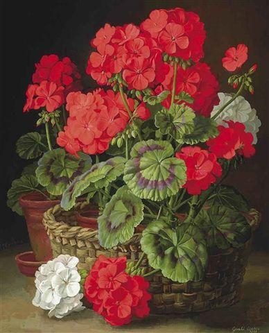 Gerald A. Cooper Geraniums 1955