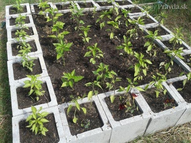 Zvýšené záhony z betónových tvárnic (fotopostup)