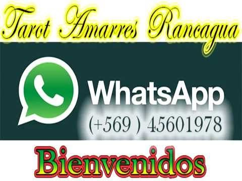 consulta tarot whatsapp amarres